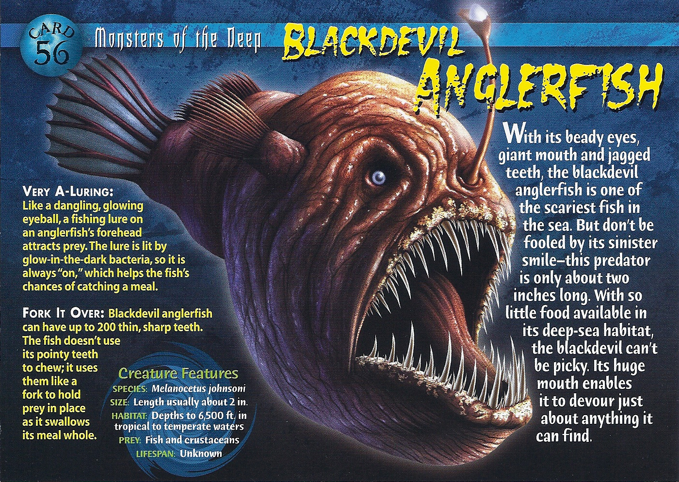 Blackdevil anglerfish wierd n 39 wild creatures wiki for Angler fish size