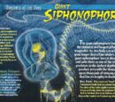 Giant Siphonophore