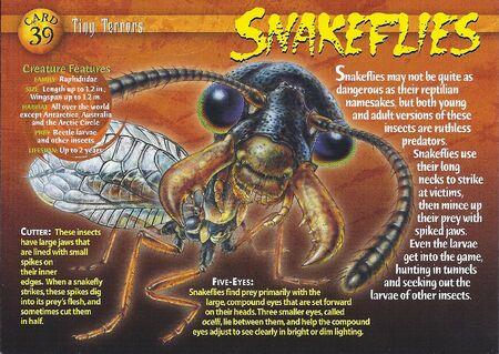 Snakeflies front
