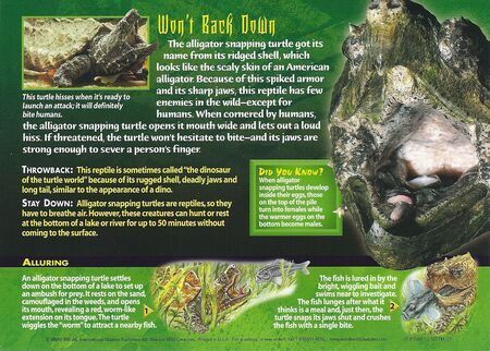 Alligator Snapping Turtle back