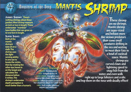 Mantis Shrimp front