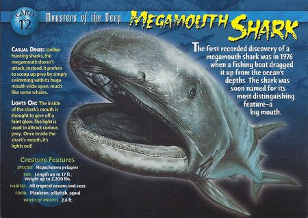 Megamouth Shark front