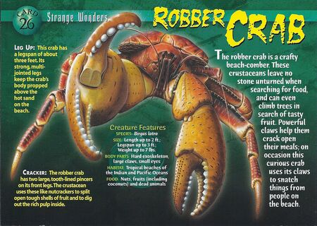 Robber Crab front