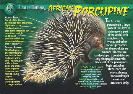 African Porcupine front
