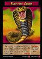 Egyptian Cobra.jpg