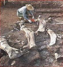 Apatosaurus Back Image