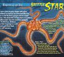 Brittle Stars