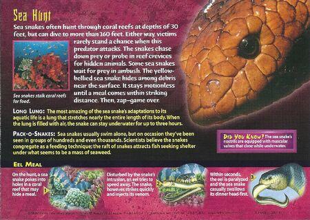 Sea Snake back