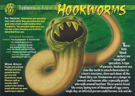 Hookworms front