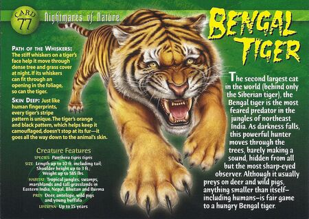 Bengal Tiger front