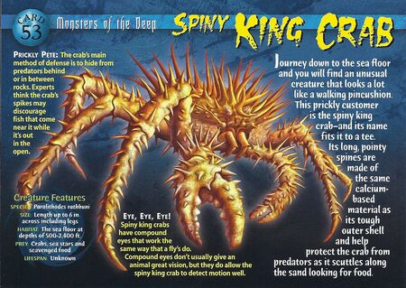 Spiny King Crab front