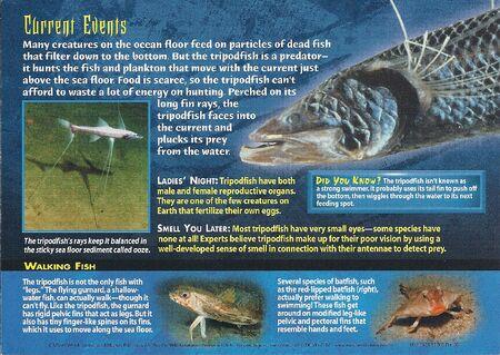 Tripodfish back