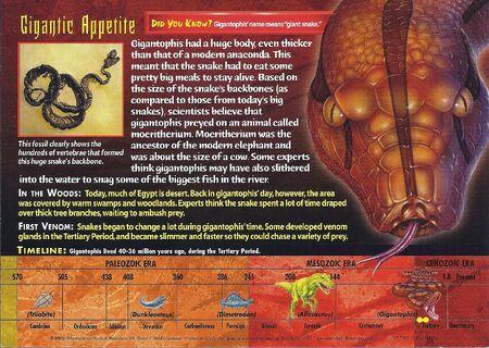 Gigantophis back
