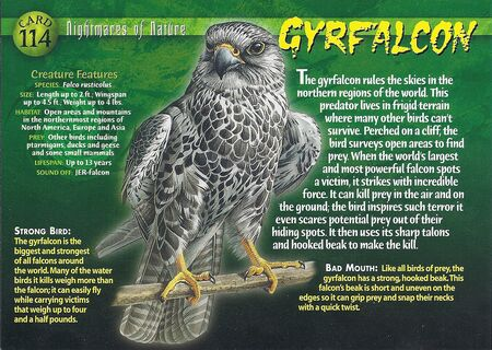 Gyrfalcon front