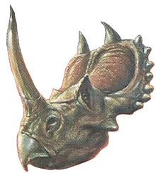Triceratops Back Image 2