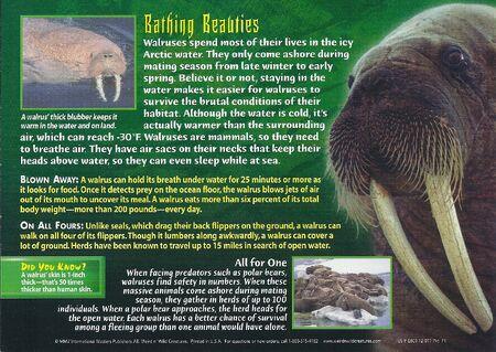 Walrus back