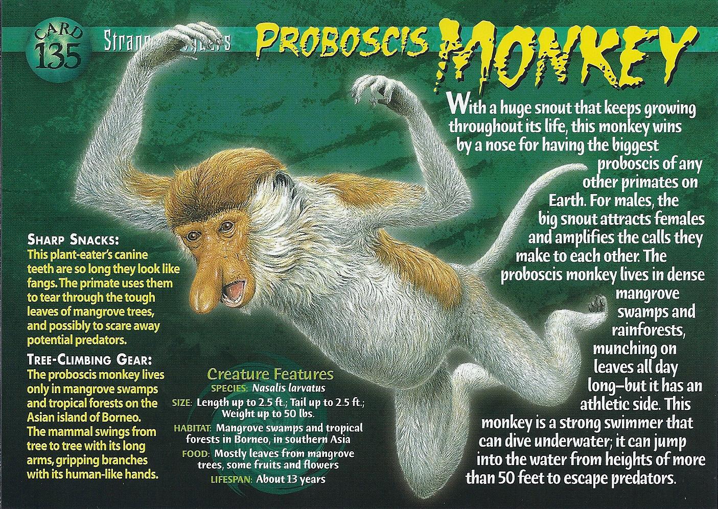 proboscis monkey weird n wild creatures wiki fandom
