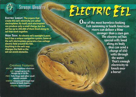 Electric Eel front