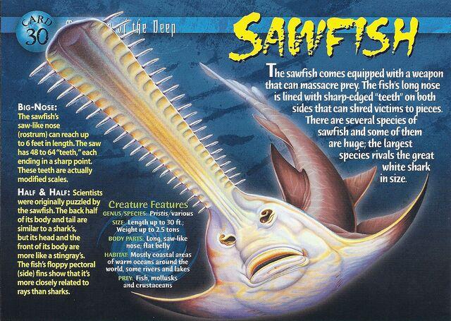 File:Sawfish front.jpg