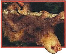 Giant Sloth Back Image