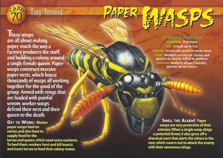 Paper Wasps front