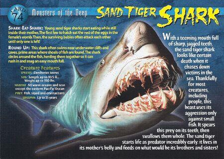 Sand Tiger Shark front