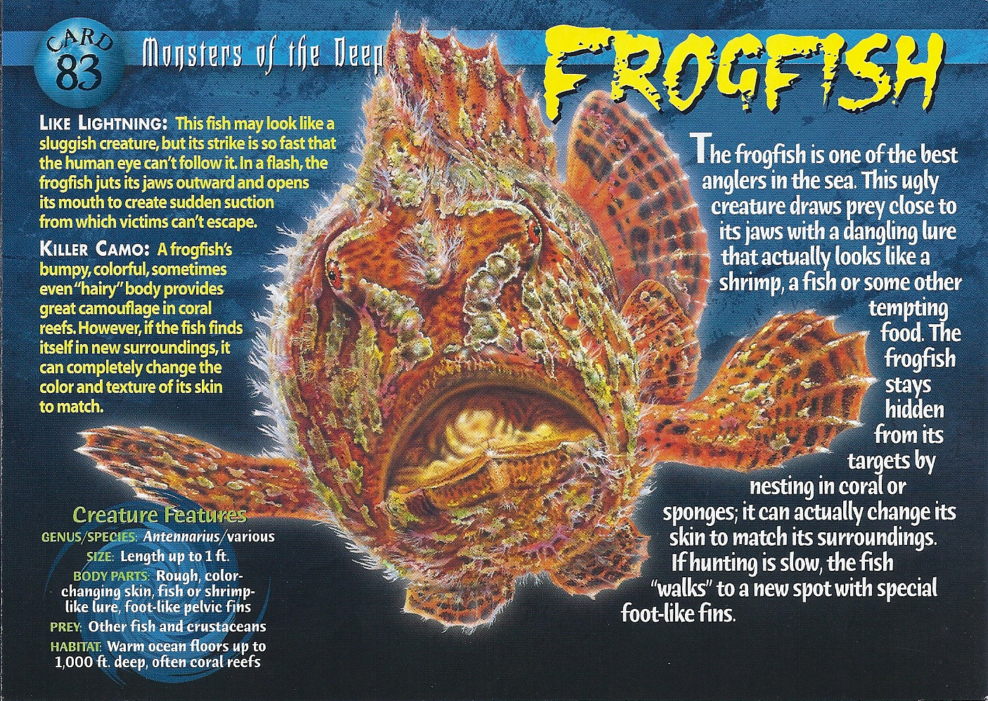 Frogfish Weird N Wild Creatures Wiki Fandom Powered