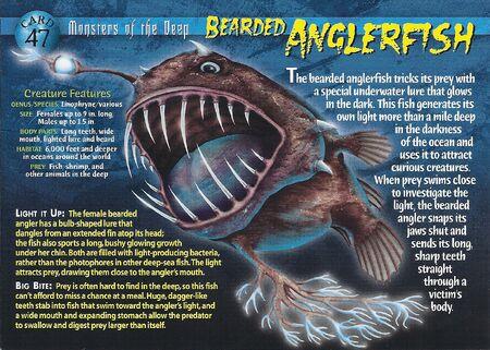 Bearded Anglerfish front