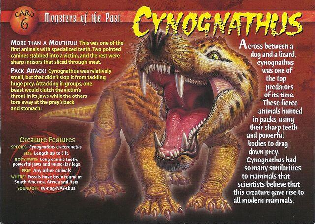 File:Cynognathus front.jpg