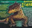 Sungazer Lizard