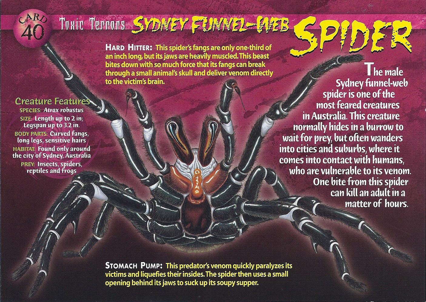 Sydney Funnel Web Spider Weird N Wild Creatures Wiki
