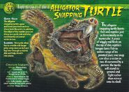 Alligator Snapping Turtle front