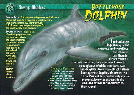 Bottlenose Dolphin front