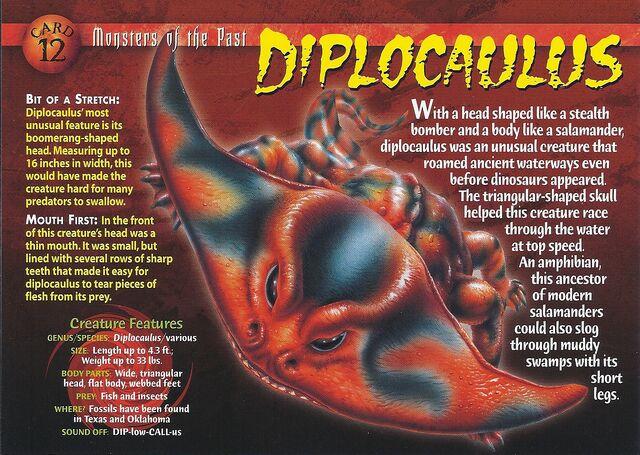 File:Diplocaulus front.jpg