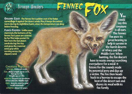 Fennic Fox front