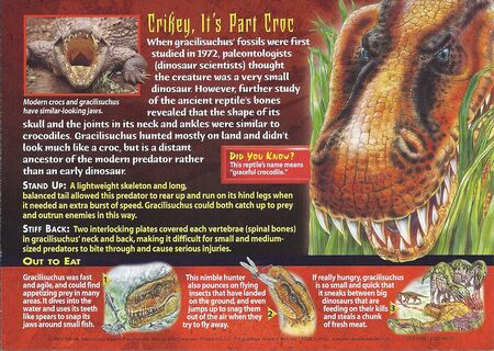 Gracilisuchus back