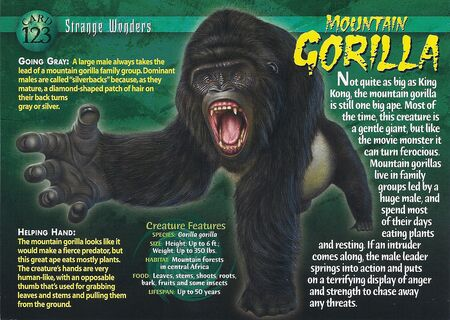 Mountain Gorilla front