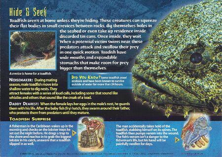 Toadfish back