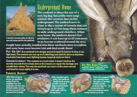 Aardvark back
