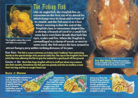 Frogfish back