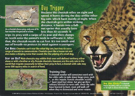 Cheetah back