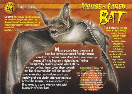 Mouse-Eared Bat front