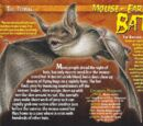 Mouse-Eared Bat