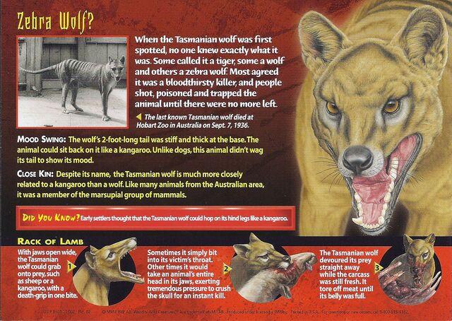File:Tasmanian Wolf back.jpg