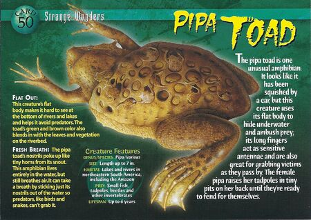 Pipa Toad front