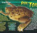 Pipa Toad