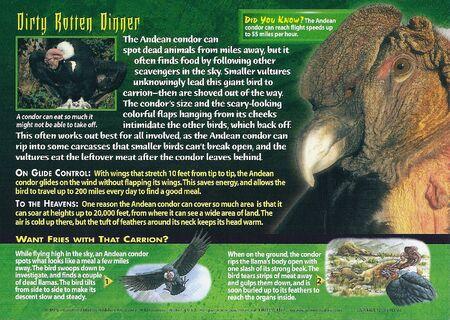 Andean Condor back