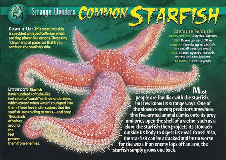 Common Starfish front