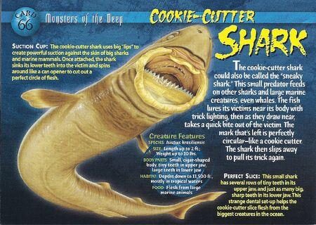 Cookie-Cutter Shark front