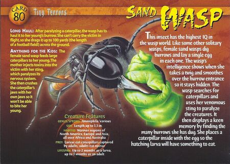 Sand Wasp front